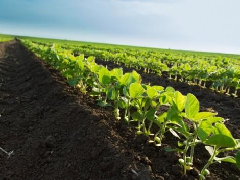 Bekeményít a kormány az élelmiszer-biztonság terén