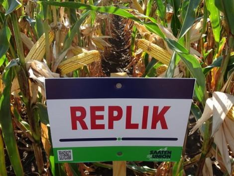 Több helyszínen is tesztgyőztes, új kukoricahibridek