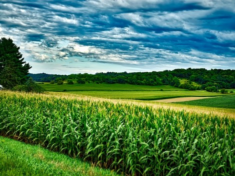 A romániai mezőgazdaság rekordévet zárt