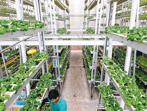 Különleges megoldás a függőleges termesztésben