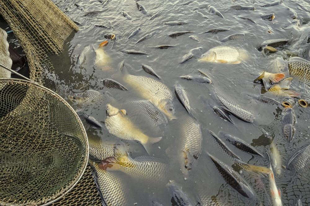 halgazdaság