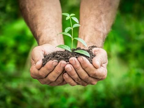 Rendkívüli hőmérséklet-növekedésre figyelmeztetnek kutatók – a megoldást a növények jelentik