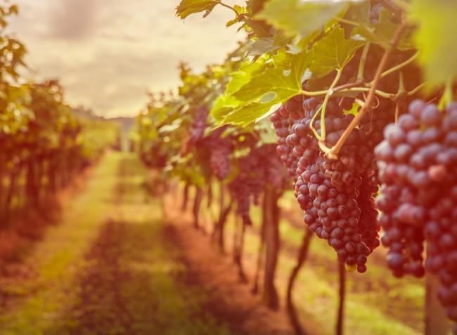 Mi várható idén a méhészet és a szőlészet területén?
