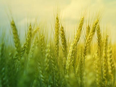 Most jelentős kedvezménnyel vásárolhat növényvédő szert!