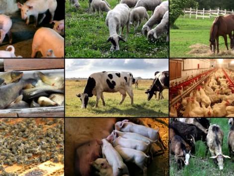 Visszatekintés 2016 – Az állattenyésztési ágazatok legfontosabb eseményei képekben