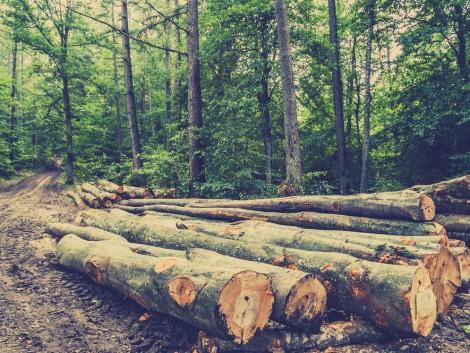 Újabb változás az erdei ökoszisztéma-pályázatban!