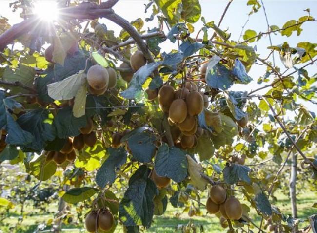 Idén bőven van még mire pályázni, új gyümölcskultúrákra is kérhető támogatás