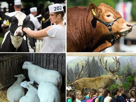 Változatos programok a XXVI. Alföldi Állattenyésztési és Mezőgazda Napokon