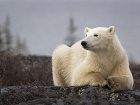 A ma élő fajok legalább negyede ki fog pusztulni a klímaváltozás miatt