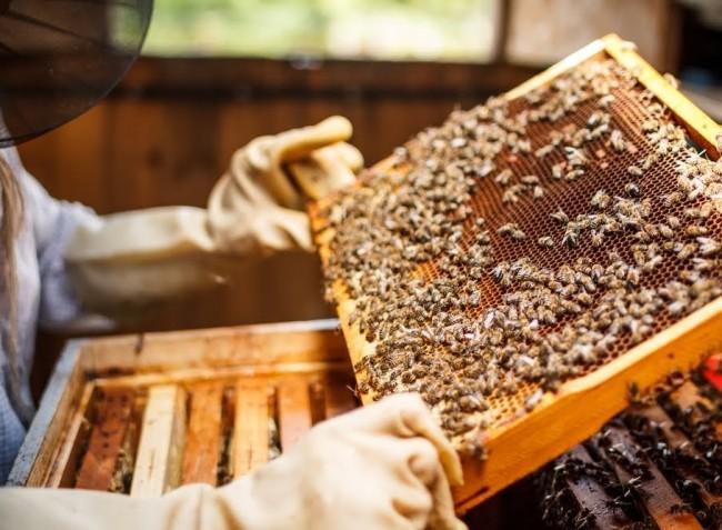 500 forint támogatás jár méhcsaládonként a méhészeknek