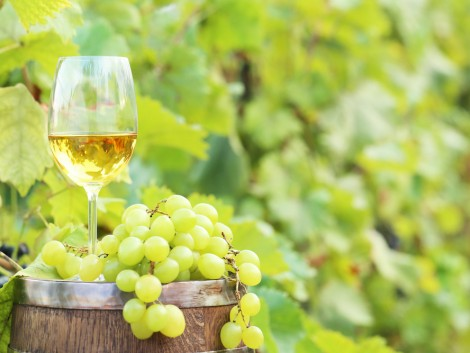 A szőlészek szerint nagyon jó évjárat lesz a 2019-es