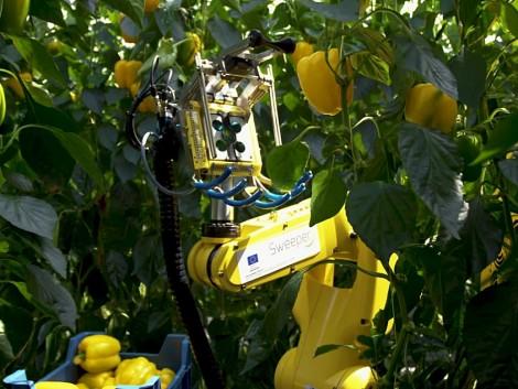 Egyre több robot dolgozik a mezőgazdaságban