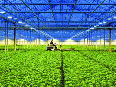 Magyarországon is elérhető világszínvonalú világítástechnika a beltéri termesztésben