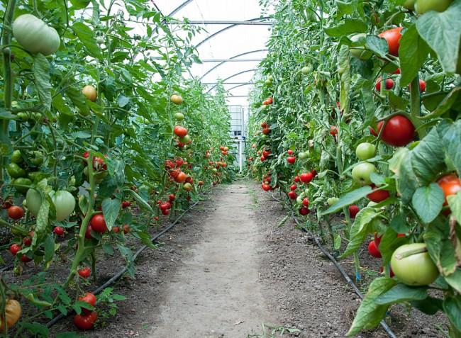A jó termés múlhat rajta – milyen káliumtrágyát használjunk az őszi alaptrágyázáshoz?