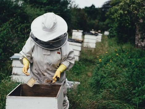 A világ első növényvédő szere, amit méhek segítettek létrehozni