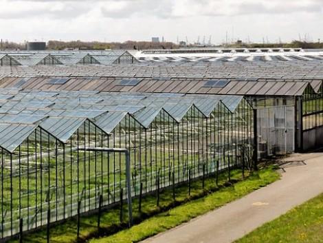 Fénykibocsátó műanyagok alkalmazása az üvegházakban