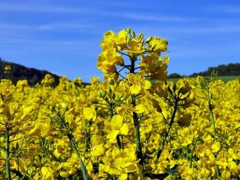 A bio-növényvédelmi eszközök piaca 2019-ben meghaladja a 4 milliárd dollárt