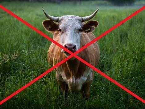 Sajtgyártás tehén nélkül – ez is lehetséges