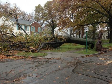 A hurrikánok ökológiai katasztrófával is járnak