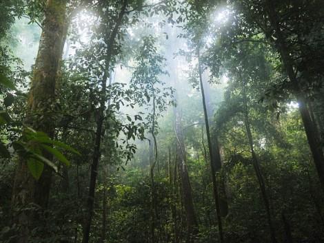 Magyarország is részt vesz az amazóniai őserdők védelmében