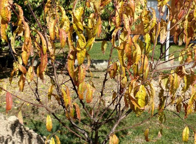 A rovarkártevők elszaporodása, a szárazság és a vízválság következményei