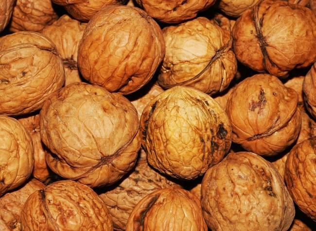 Egyes ültetvényekben a dióburok-fúrólégy a termés 100 százalékát letarolta
