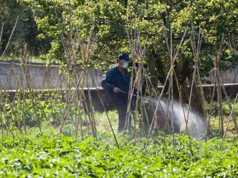 Új károsítók állítják kihívás elé a termelőket, mégis egyre több növényvédőszer-hatóanyagot vonnak ki