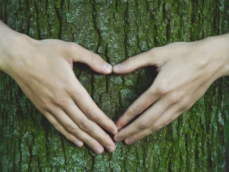 Példaértékű Somogyország erdőgazdálkodója