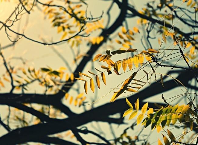 Növényvédelmi előrejelzés: A kertekben sok a tennivaló