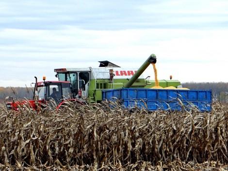 Nagyon nem mindegy, mikor adják el a termelők a kukoricát!