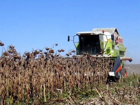 Történelmi rekordhozam és magas árak! Jó évet zárhatnak a napraforgó-termesztők