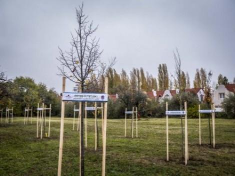Az agrártárca egyik válasza az éghajlatváltozásra a faültetés