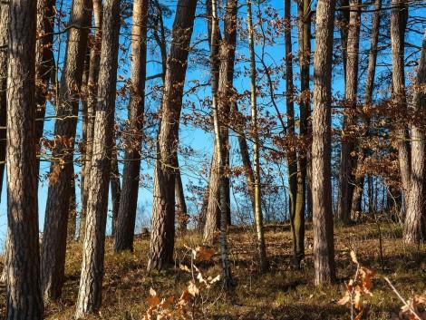 Folyamatosan nő az erdőkben található faállomány