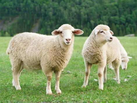 A német agrártermelők közül egyre kevesebben és egyre kevesebb állatot tartanak