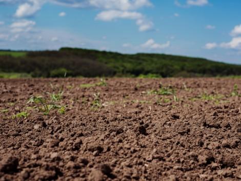 Talajlakó gombák csökkenthetik a műtrágyaigényt