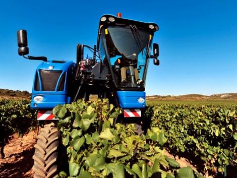 Kiváló borok extrém időjárás dacára is: a szüret jövője a szőlőkombájnról szól!