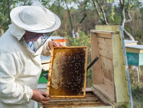 2020-tól 25 százalékkal több támogatást kapnak a méhészek