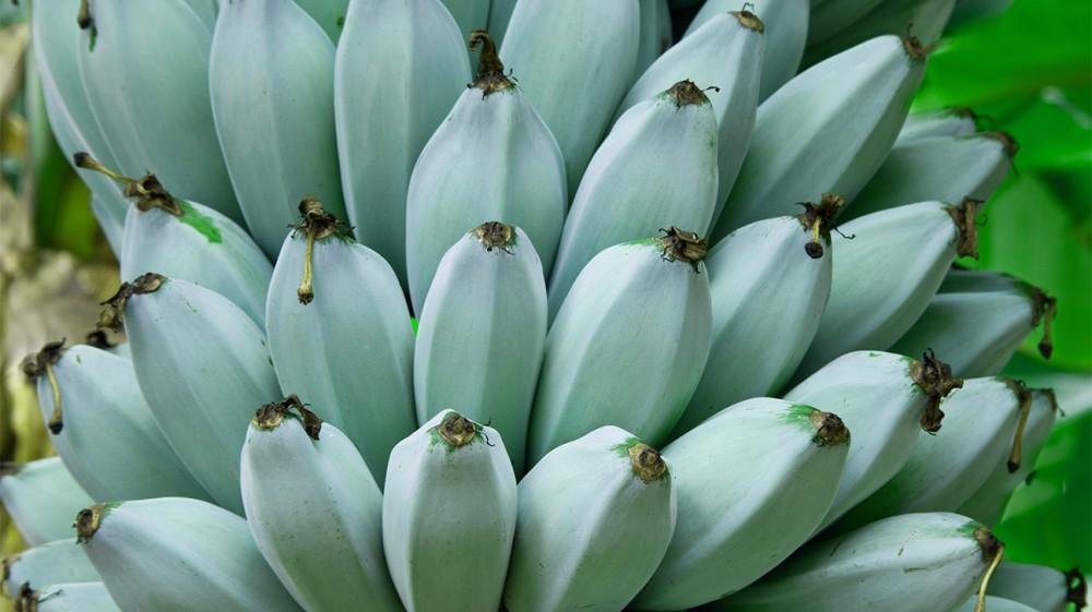 kék banán