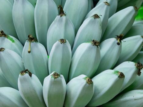 Kék banán, aminek jégkrém íze van