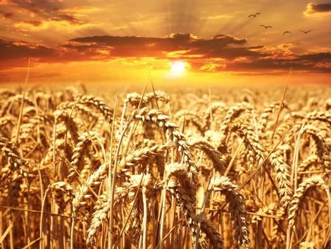 Tovább estek a gabonaárak