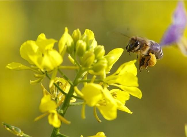 Fókuszban a méhek és a környezet védelme
