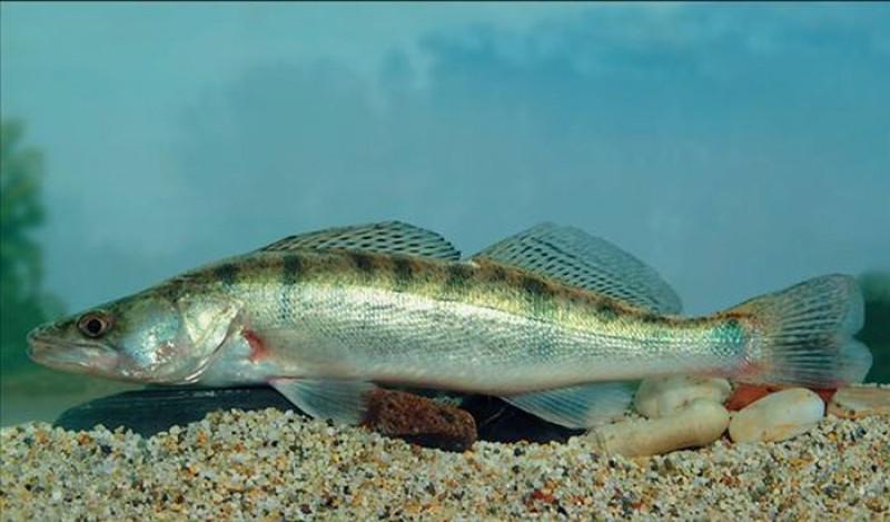 horog egy hal társkereső oldalon bevált online társkereső nyitók