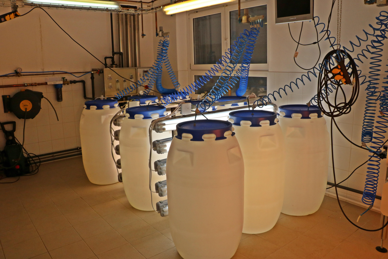 Félüzemi léptékű algatenyésztés a teljesen magyar tulajdonú Albitech Kft. budapesti laboratóriumában