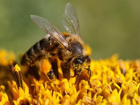 A 2019-es év rosszul zárult a méhészek számára