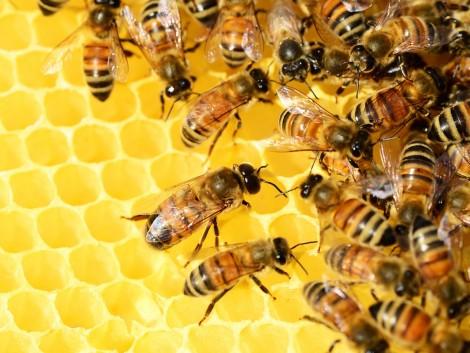 A méhészek egy év alatt 1,8 milliárd forint közvetett támogatási forráshoz jutnak