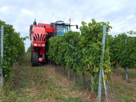 Közel a határidő a szőlő szerkezetátalakítási támogatás kérelmezésére!