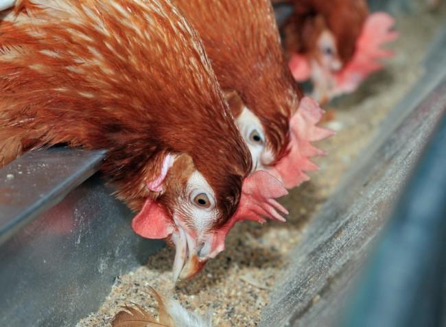 Újra lehet pályázni az állattartó telepek korszerűsítésére!