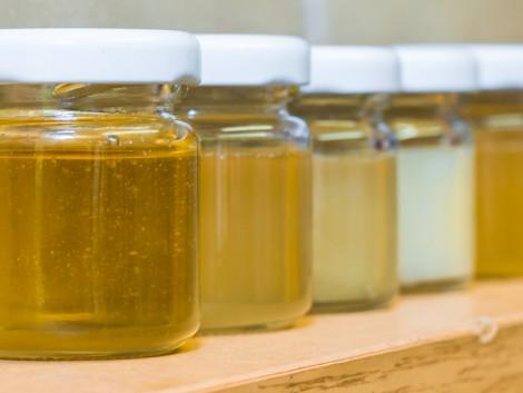 Össze fog dőlni a mezőgazdaság a méhészek nélkül