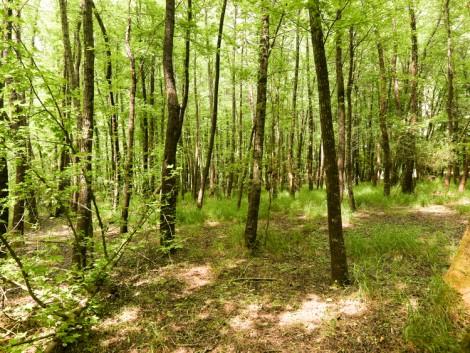 Február 1-jétől ismét igényelhető a fiatal erdők támogatás