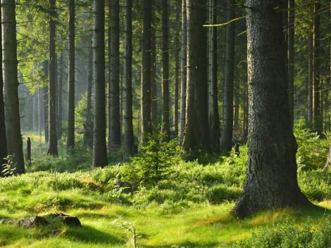 Magyarország az elmúlt évszázadban csaknem megduplázta erdőterületét